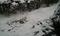Snow in my front yard uwu