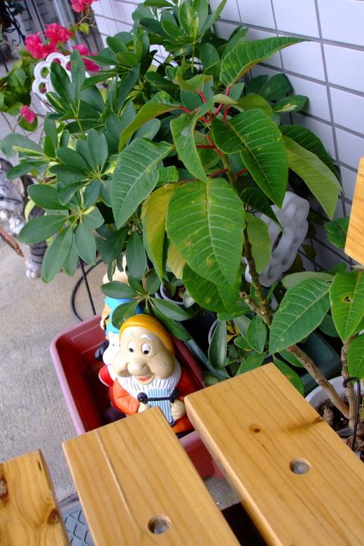 ベンチの横の小人、赤い茎の植物