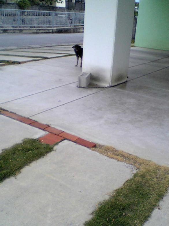 柱に隠れる黒い犬