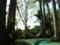 椰子のハンモック