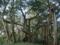 船越グスクの聖木