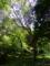 佐敷グスクの木