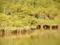 マングローブ林の鳥