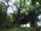ノロ屋敷跡の木々