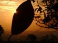 夕焼け、蜘蛛の巣にかかった葉