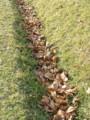 溝に溜まった枯葉