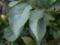 ニオイバンマツリ