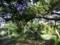 八重島公園にて