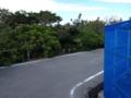 富祖崎緑地のハマジンチョウ群落