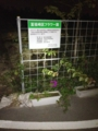 富祖崎区フラワー園