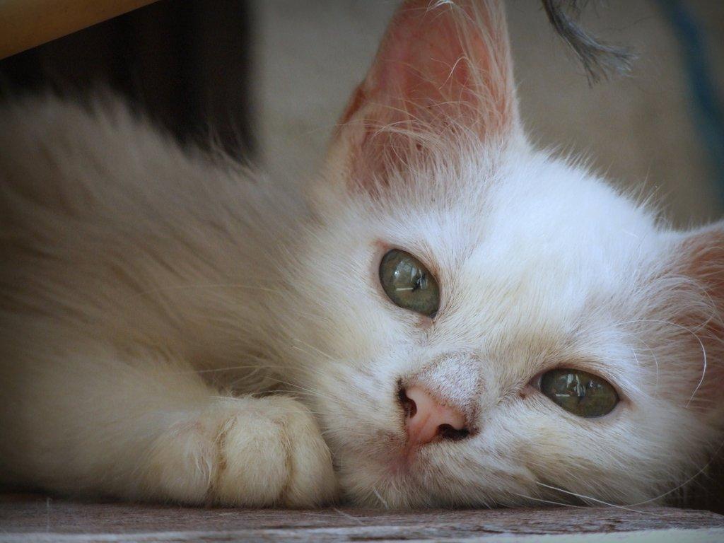 [動物]猫