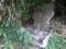 ハル石「モ・上の川原」