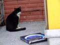 海野漁港の猫
