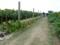 宮平ひまわり畑