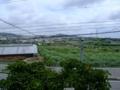 宮平ひまわり畑(遠景)