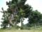 玻名城のお宮の横の拝所@八重瀬町字玻名城