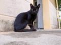 2016.06.05 黒猫