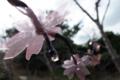 八重瀬公園@八重瀬町字富盛