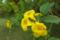黄色い花の植物