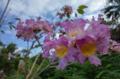 ピンク色の花の木