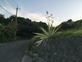 [白]キミガヨラン