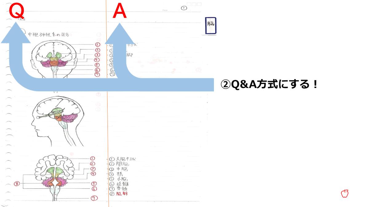 f:id:ST-RingoAllergy12:20200601223850p:plain