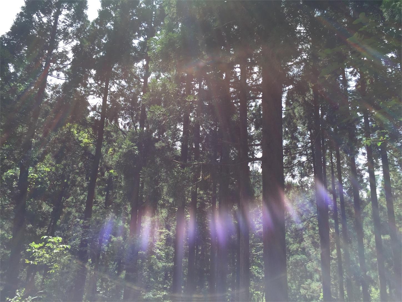 f:id:SUGICOO:20160914192228j:image