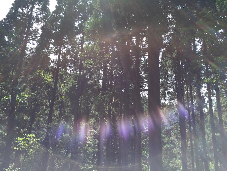 f:id:SUGICOO:20161027143007j:image