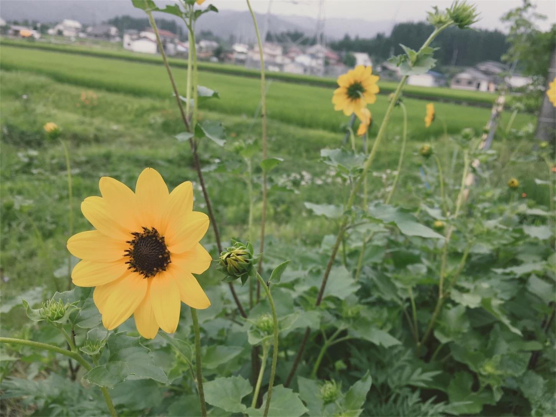 f:id:SUGICOO:20170724195134j:image