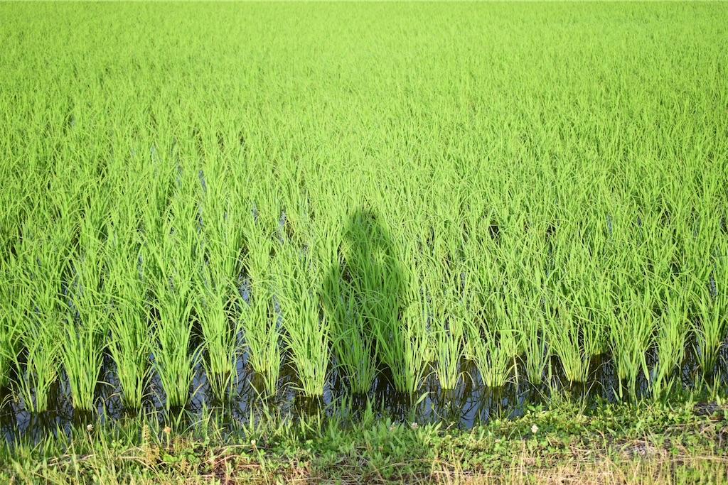 f:id:SUGICOO:20200620200207j:plain