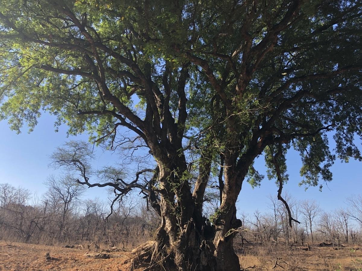 f:id:SUKEafrica:20190616072403j:plain