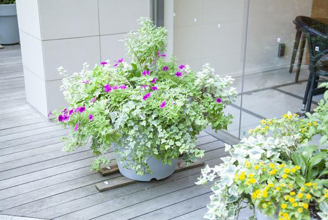 ウッドデッキの植栽は緑豊かでカラフルな花も植えられている