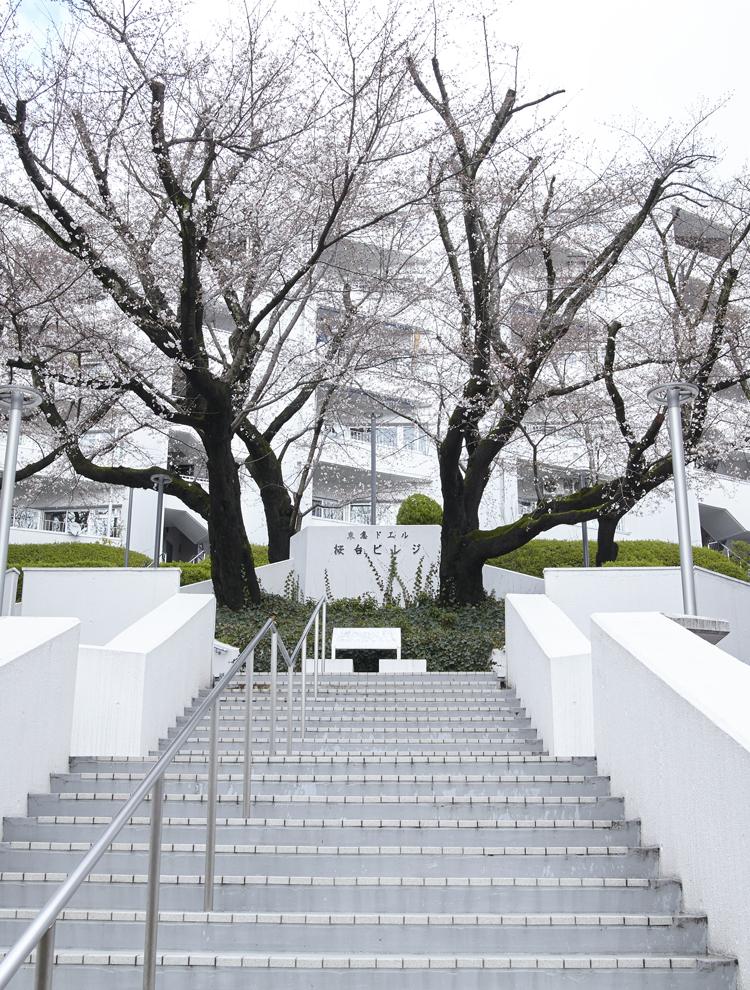 桜が美しい、桜台ビレジの外観