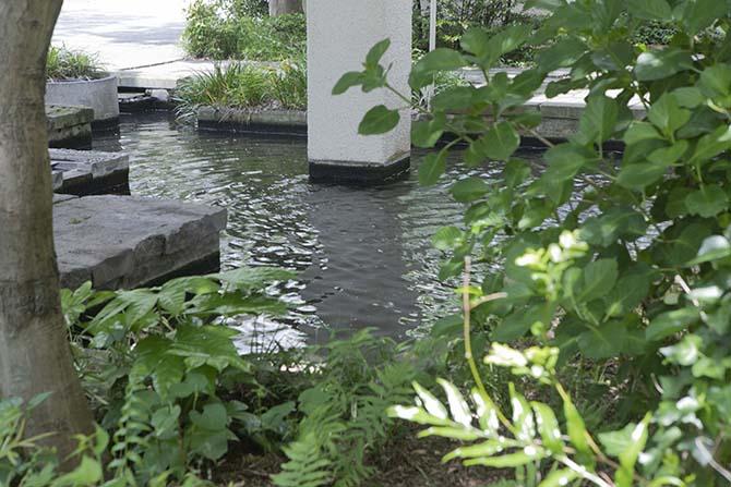井戸水を利用した池