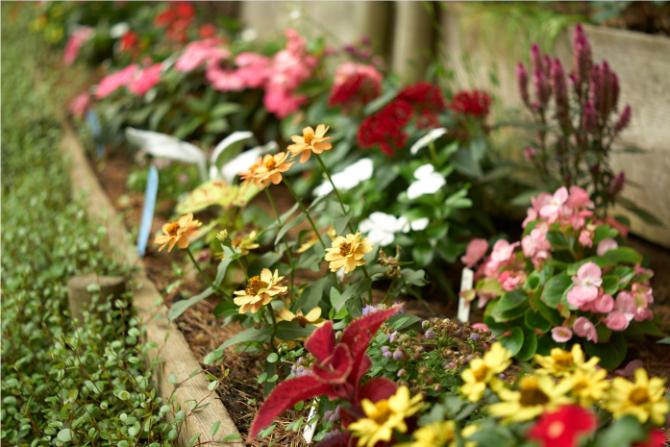深沢ハウス内の花壇に咲く花