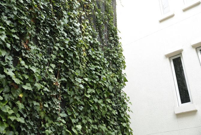 ツタが生い茂るルクセンブルグハウスの「ラックスキューブ」