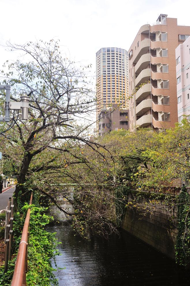 目黒川から見た中目黒アトラスタワー