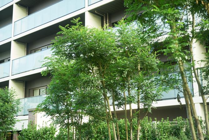 ブランズ横浜のオーナーズガーデンに面した住戸