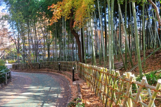 竹林も見事なサンシティ