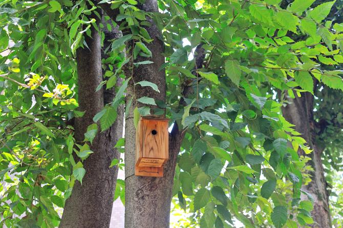 小平グリーンロードにある巣箱