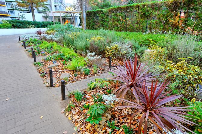 ブラウシアのゲート横の植栽の写真