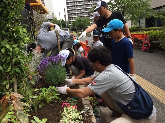 ブラウシアの植栽植え込み時の写真