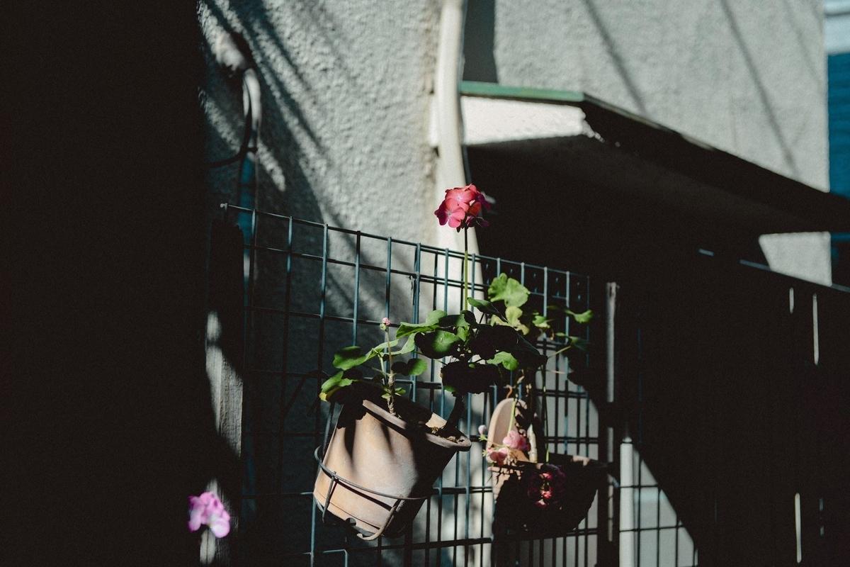 と ホット まったり の 道 花 に で