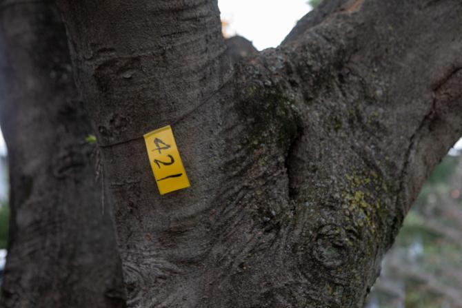 ヒルサイド久末の植栽の番号札