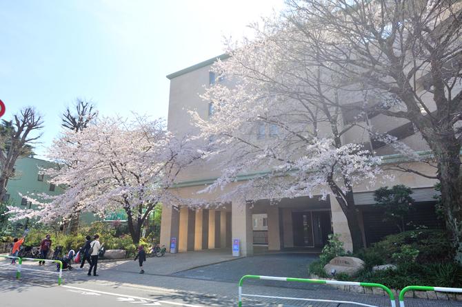 プラウド駒込前の桜の巨木