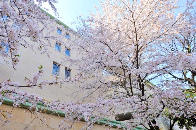 プラウド駒込と桜の写真