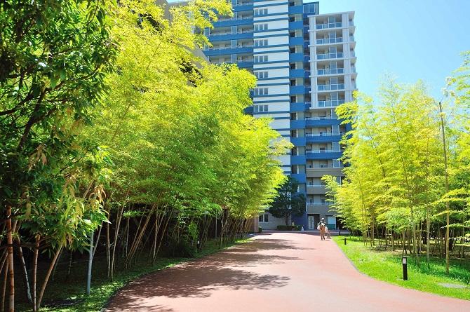 ザ・ミレナリータワーズ敷地内の竹林