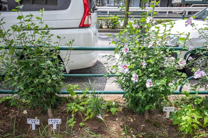 湯島花いっぱいの会による植栽