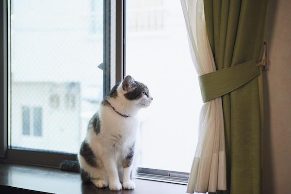 リビングの窓枠の下にカウンターを設け、猫が外を見て過ごせるスペースに