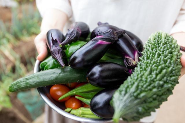 家庭菜園のイメージ写真